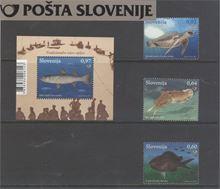 Živalstvo VI – slovensko morje