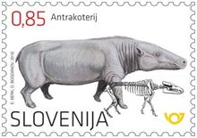 Fosilni sesalci Slovenije - antrakoterij