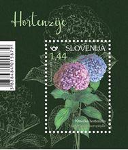 Rastlinstvo - hortenzije (blok)