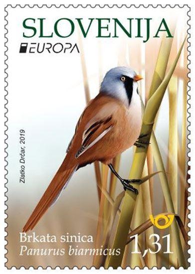 EUROPA - ptice - Brkata sinica
