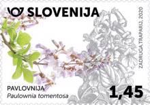 Rastlinstvo - Pavlovnija