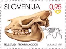 Fosilni sesalci Slovenije - tellerjev prohirakodon