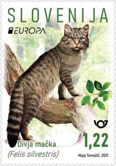 EUROPA - divja mačka